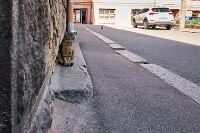 Трое в Выборге кот кошка голубь человек