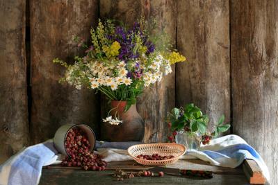 Луговая клубника Клубника луговая цветы полевые