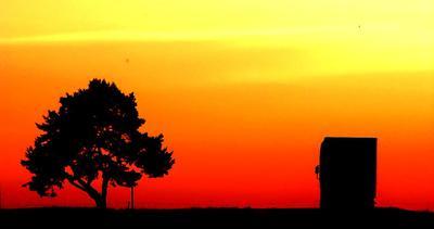 По дороге в Коссово* приключение, дорога, путешествие, автостоп, дерево