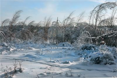Зимние ветра зима холод ветер берег реки