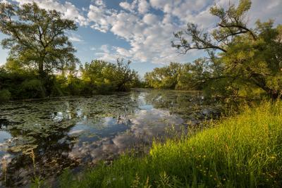 Июнь Июнь река деревья отражение облака кувшинки