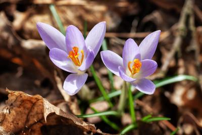 Весна идёт весна солнце цветы