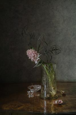 Одинокий гиацинт натюрморт стекло цветы гиацинты ракушки