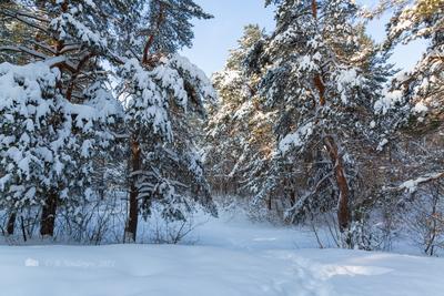 Зимняя сказка зимний пейзаж снег деревья