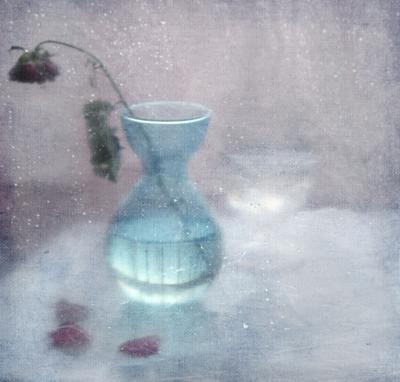 *** розы бордовое белое голубое иннамеркиш