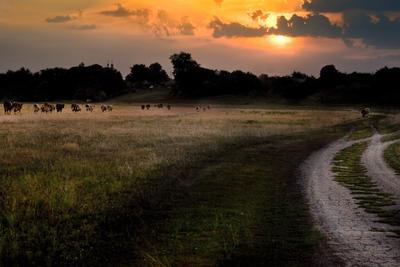 На исходе лета Коровки. закат