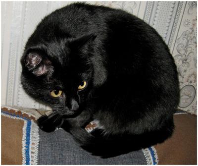 Только чёрному коту и не везет... чёрный кот