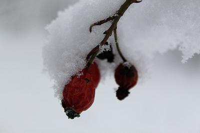 Зимняя ягода