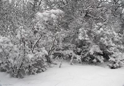 Просто зима Февраль