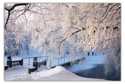 зимняя зима парк снег лёд дерево мост пруд солнце день