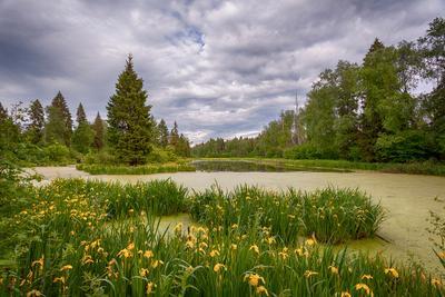 Цветущее озеро