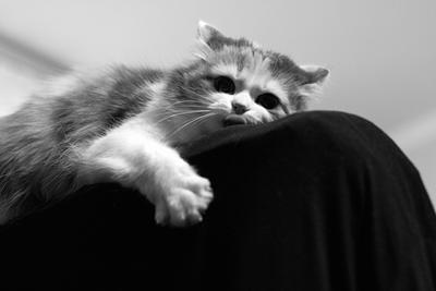 куку день кота!
