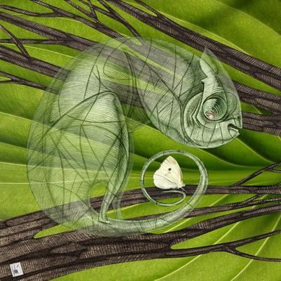Хамелеон хамелион, бабочка, прозрачность
