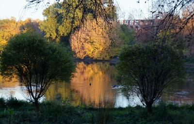 осень в Михалково