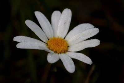 Цветок, покрытый росой Роса цветок утро капли