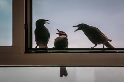 Беседа о смысле жизни ... птицы беседа разговор