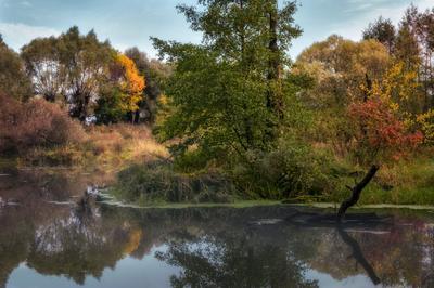 У озера. пейзаж осень