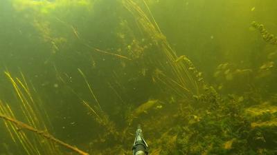 Зубастая охотница Волга подводная охота под водой охотница