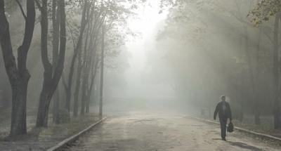 Утренний туман Пейзаж жанр утро туман парк