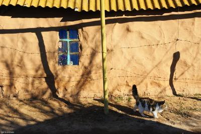Хвосты кото-street