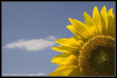 Подсолнух Подсолнух, Растение, Солнце, Небо, Семечки