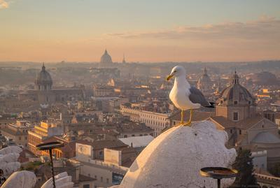 над Римом чайка Рим Италия