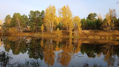 Отражение Осень.сентябрь.пруд.хорошее настроение..