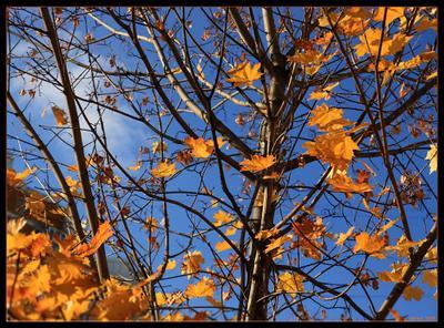Краски осени краски, осень, Москва, лес, листья, небо, облака, Митино