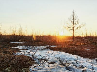 Последний снег в тундре солнце закат тундра север Новый Уренгой природа снег весна