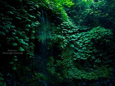 Джунгли Бали