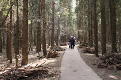 "народная""тропа""через лес"