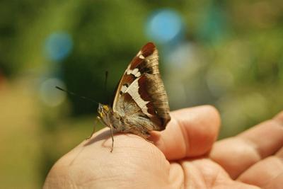 *** природа насекомые фауна макро