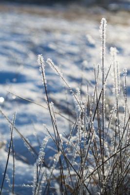 травинки травинки иней бокэ зима