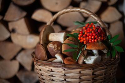 *** грибы грибная пора деревня север лето в деревне белый гриб подосиновик рябина