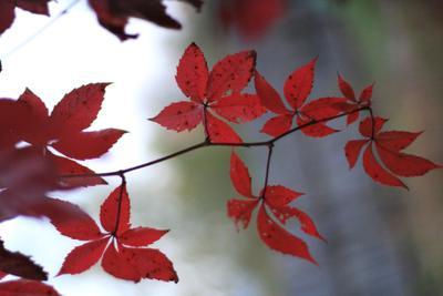 *** осень листья