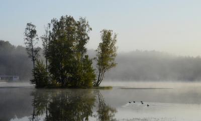 Утренний заплыв......