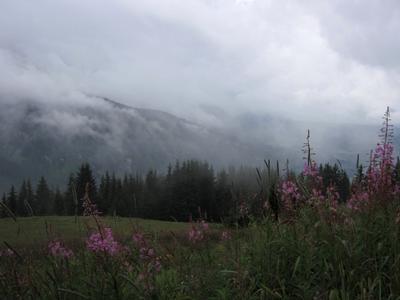 Рождение облаков Альпы кипрей горы в облаках роса franch alps willow-herb clouds dew
