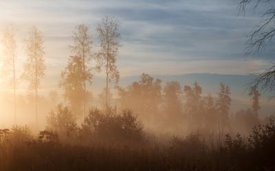 Рассвет на болоте рассвет
