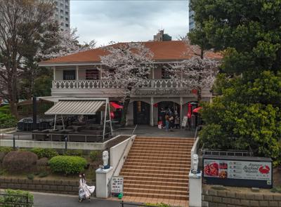 Летящей походкой Токио ресторан девушка весна сакура