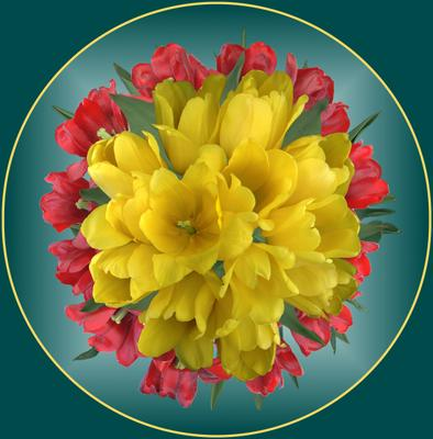Тюльпаны Тюльпаны