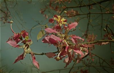 Южные цветы, розовый, цветение, ветки