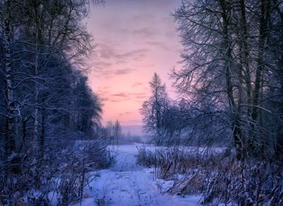 Однажды, в студеную зимнюю пору.... Вечер закат лес январь мороз зима сказка