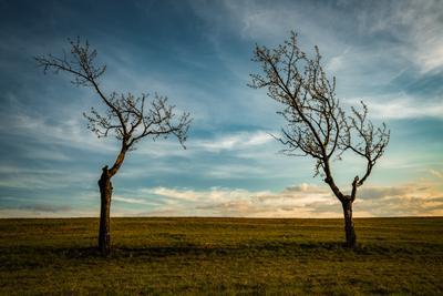 С последними лучами деревья дерево поле закат природа пейзаж небо