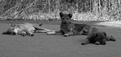 про собачью жизнь 4 щенок