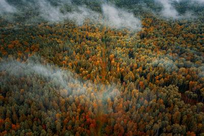 *** лес осень природа деревья облака