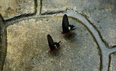 Свидание  у речки... бабочки.асфальт.любовь