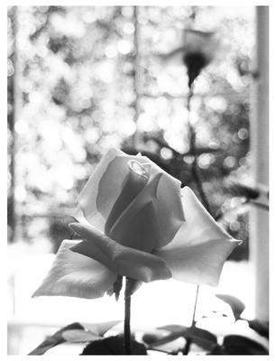 Доброе утро любимый, я на кухне роза чёрное белое