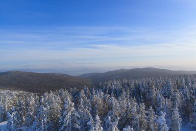 зимний лес лес