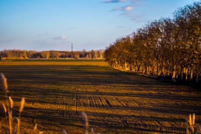 Солнечный денёк Лес солнце поле