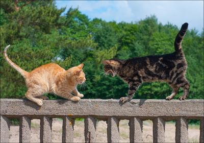 Брысь с моего забора! (1) кот безымянный кошка Динка